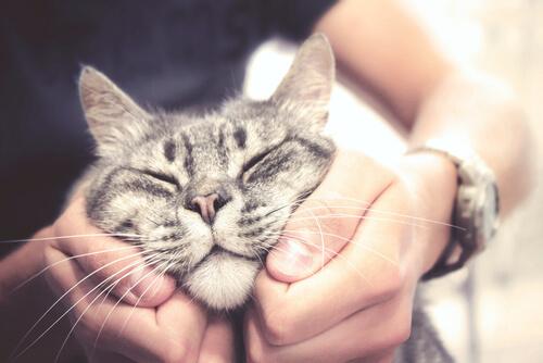 Dueño afectuoso con su gato