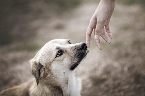 Hay estudios científicos sobre la conexión entre perros y humanos