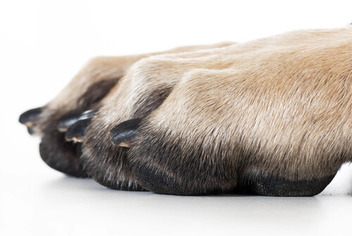5 problems that could affect your dog's claw