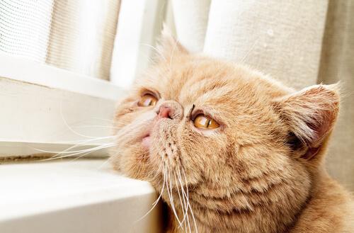 Ocho enfermedades comunes en gatos mayores