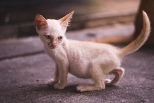 Gato orinando