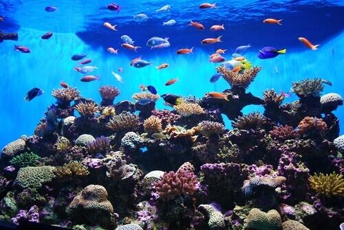 Las características especiales de los peces planos
