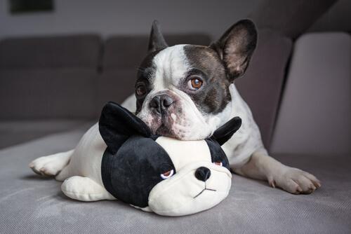 Infertilidad en perros: diagnóstico y tratamiento