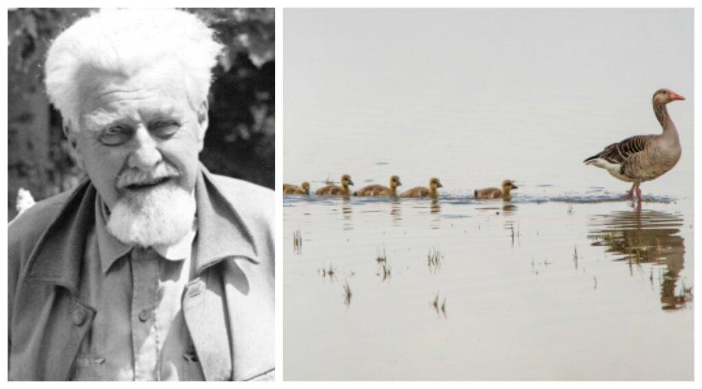 Konrad Lorenz y los patrones de conducta animal