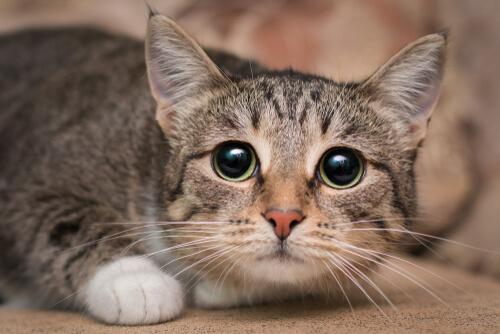 Look of a cat