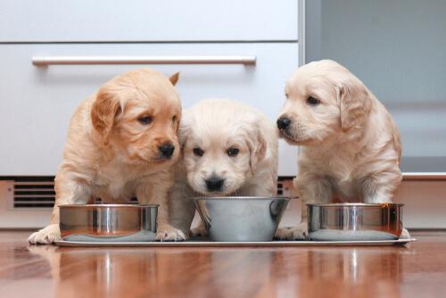 Necesidades nutricionales de los cachorros