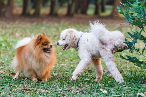 No solo en los árboles: a veces los perros orinan en las personas