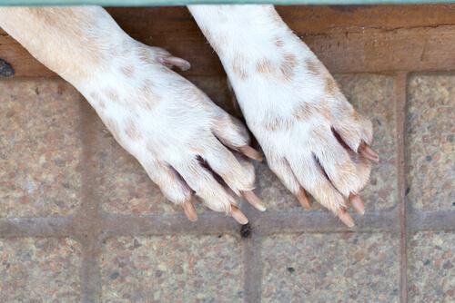 Patas del perro