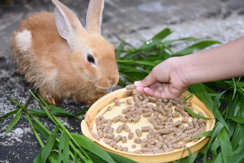 Pellets para conejos