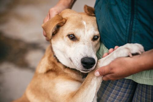 Adopción o compra de mascotas