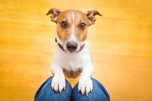 Perro busca atención de su amo