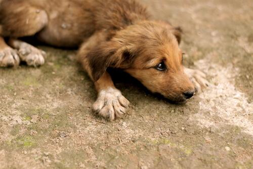 Perro callejero con mirada triste