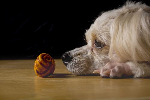 Perro observa objeto