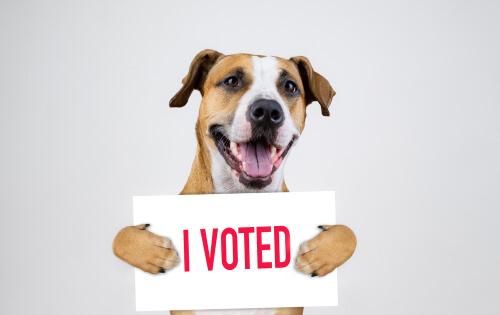 Campañas conocidas por los derechos de los animales