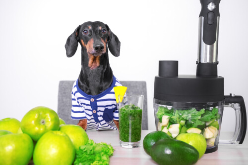 Perro con vegetales y frutas