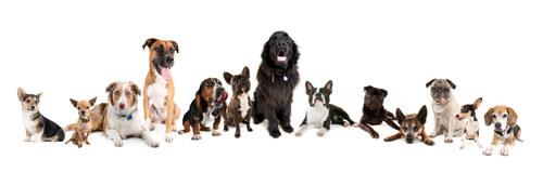 Perros de diversas razas y tamaños