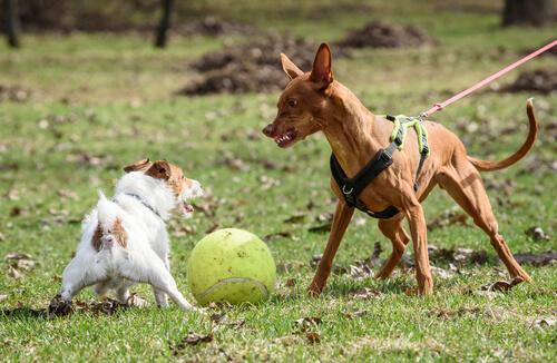 Perros enfadados