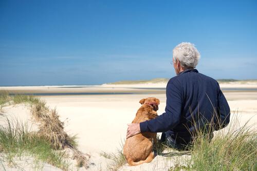 3 condiciones de salud que hay que tener en cuenta en perros mayores
