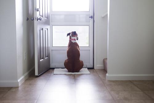 ¿Por qué los perros ven las puertas invisibles?