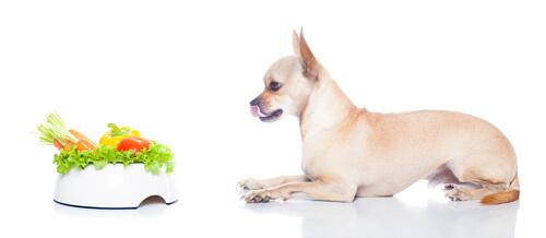 ¿Pueden los perros convertirse en veganos?