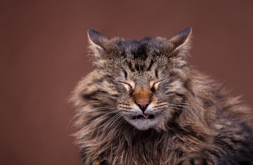 Síntomas y causas de los resfriados en gatos