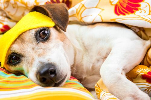 ¿Existen los trastornos del sueño en perros?