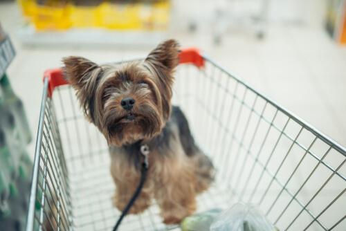 Los vendedores de perros no pueden llevarlos en un carro