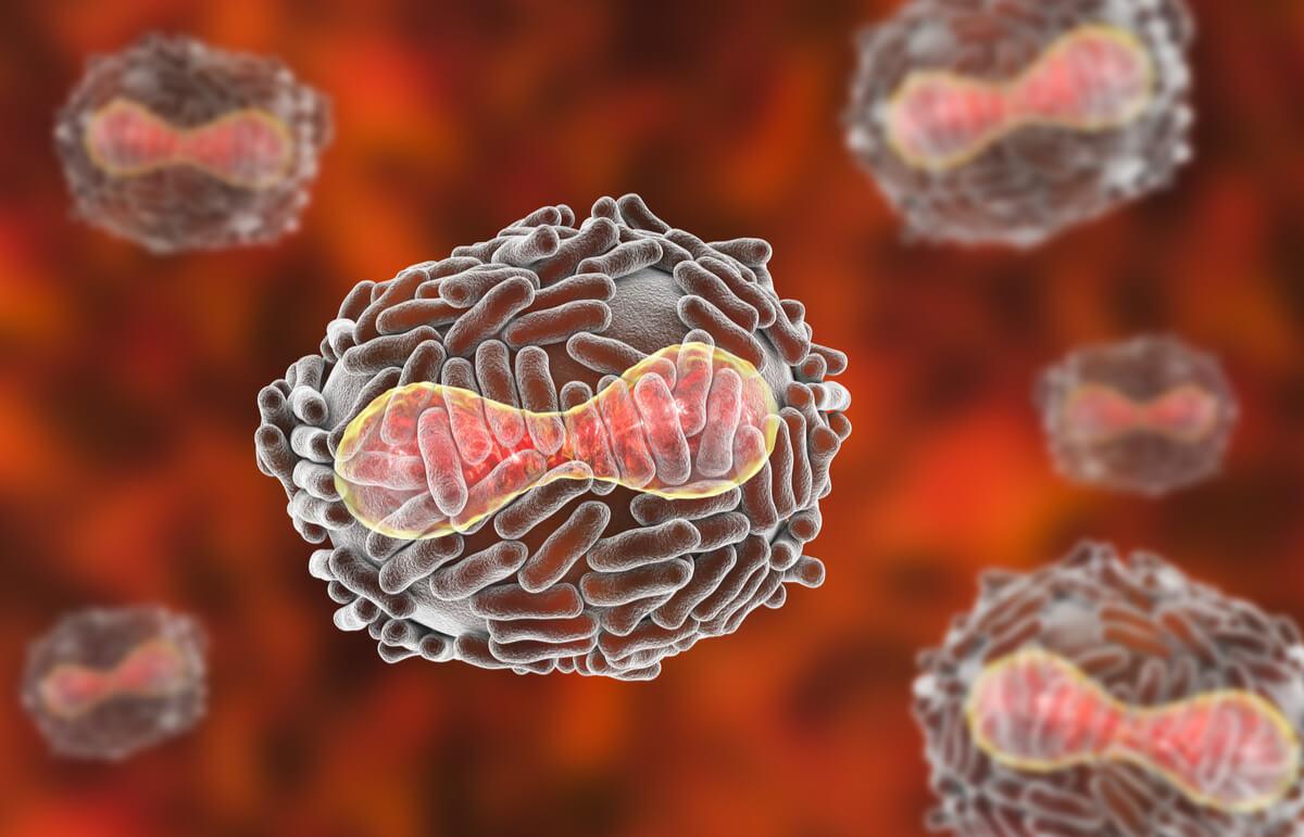 Virus de la viruela.