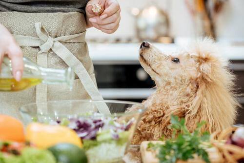 Beneficio del aceite de oliva para perros