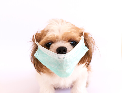 Top 5 + 1 of The Most Contagious Canine Conditions