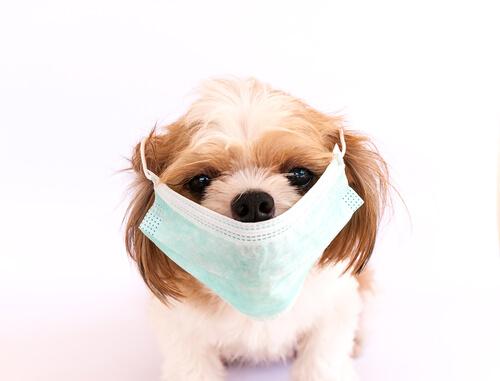 Las 6 afecciones caninas más contagiosas