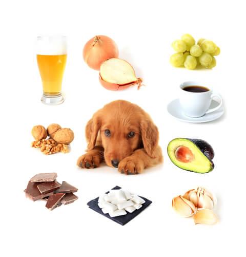 Alimentos tóxicos para los perros: ¿cuáles son?
