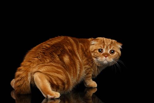 ¿Cómo ayudar a un gato a superar sus miedos?