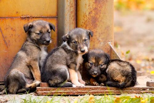 castrar o esterilizar a un perro evita el abandono de cachorros