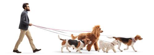 ¿Qué debes tener en cuenta al contratar a un cuidador de mascotas?