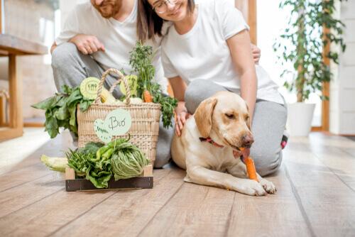 Dietas vegetarianas para perros