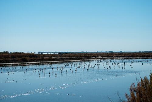 Las especies de aves en Doñana también pueden estar en la Red Natura 2000
