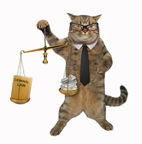 Gato como abogado