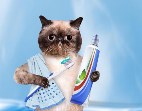 Gato con cepillo y pasta de dientes
