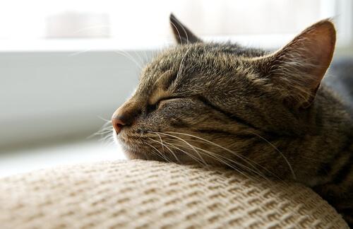 Gato dormido en el sofá