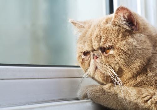 Gato pegado a la ventana
