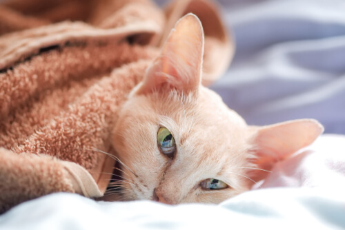 Epilepsy and Seizures In Cats – Causes   Treatments