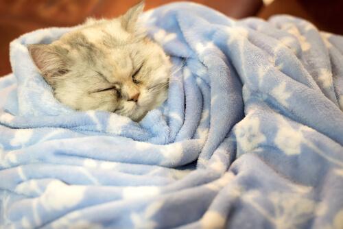 ¿Los gatos hibernan en invierno?