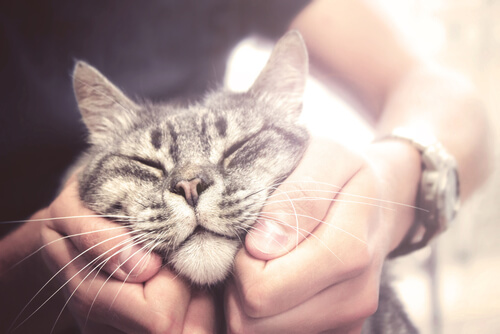 Razas de gatos más amigables: ¿cuáles son?
