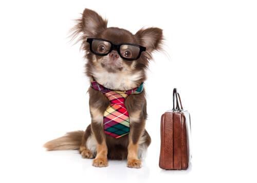¿Puede tener una mascota un abogado de oficio?