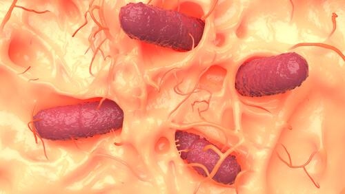 Microorganismos en la pielMicroorganismos en la pielMicroorganismos en la piel.