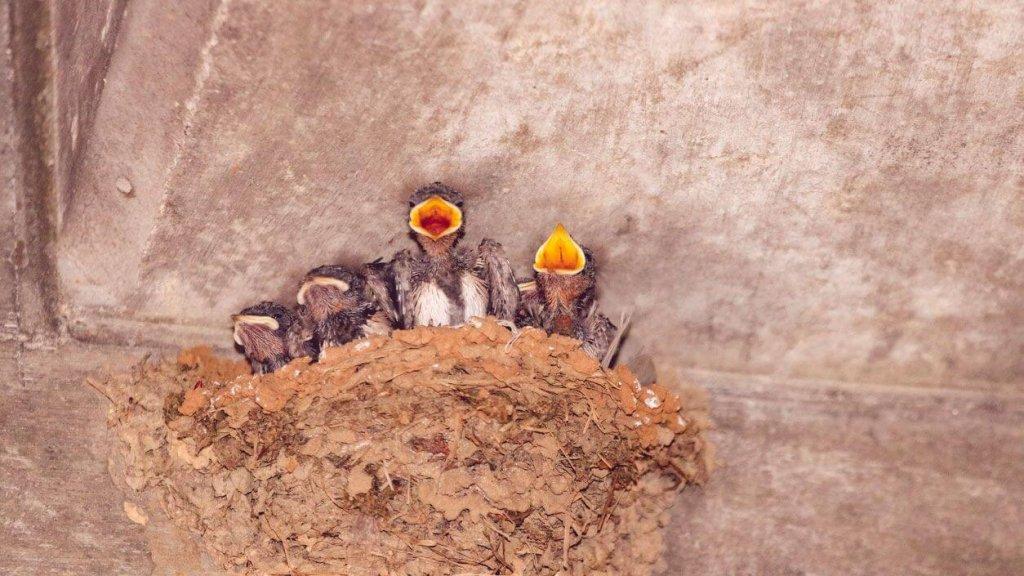 Efectos y sanciones legales de destruir nidos
