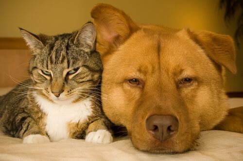 Problemas de salud asociados a obesidad en perros y gatos