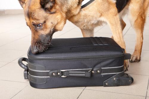 Olfato de los perros policía