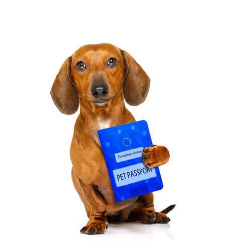 Pasaporte europeo para perros